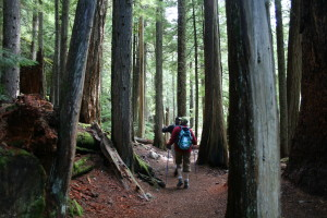 Hike to Lake Cheakamus amongst the giant cedars