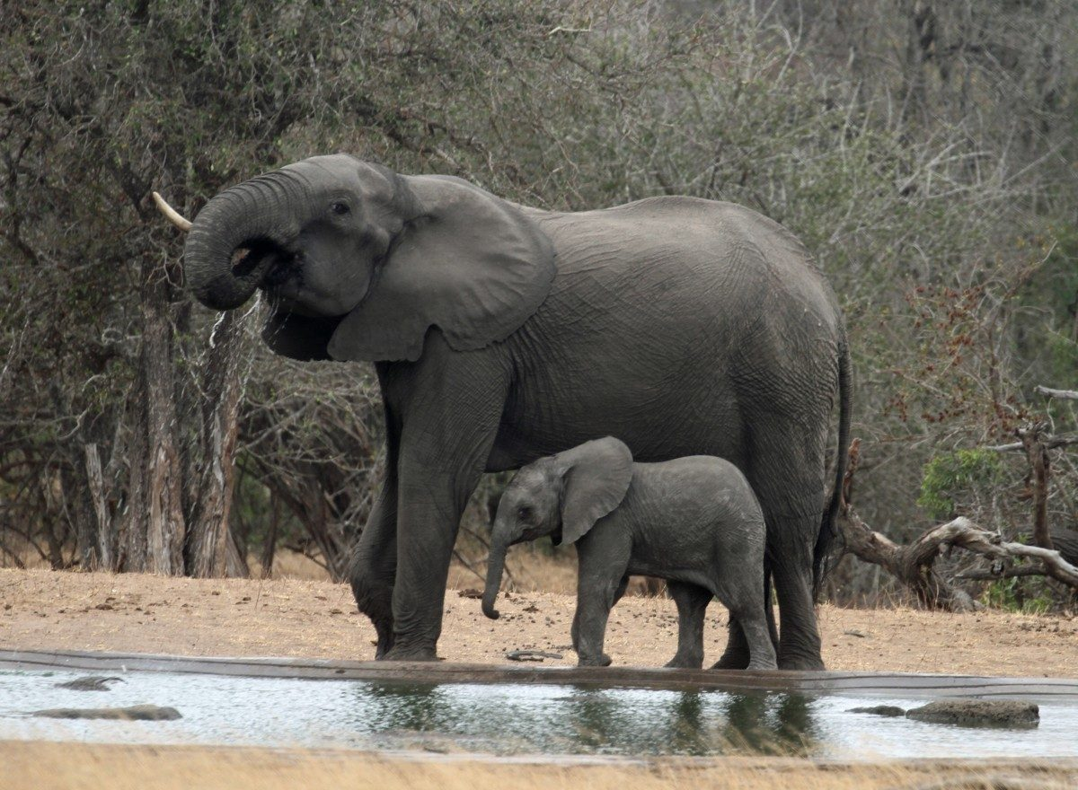Kruger National Park – a 21 day amazing adventure